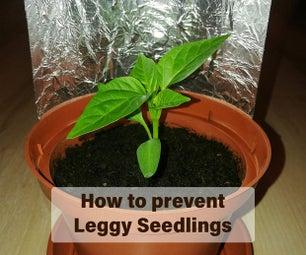 通过增加光照强度来防止长腿秧苗