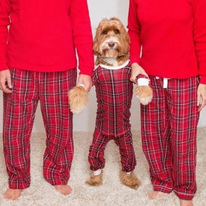 How to Dress Your Pup in Pajamas!