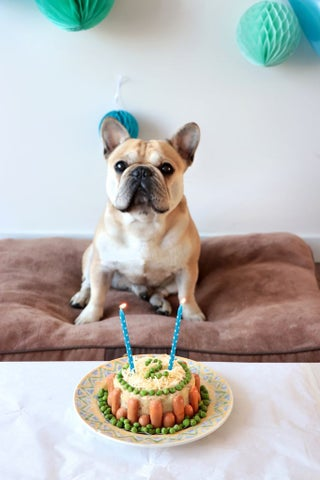 Peachy Layered Birthday Cake For Your Dog 7 Steps With Pictures Funny Birthday Cards Online Ioscodamsfinfo