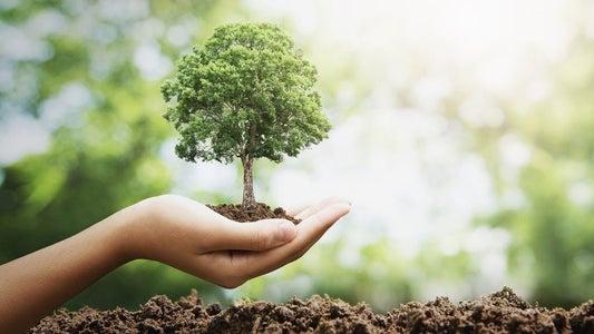 Tree Planting Paintballs