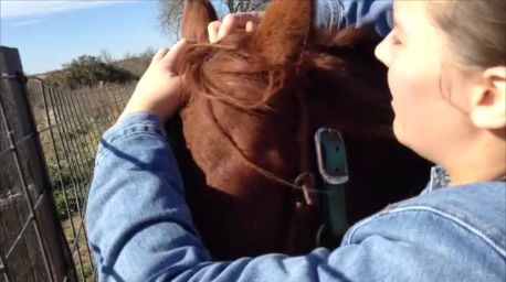 Put on the Bridle