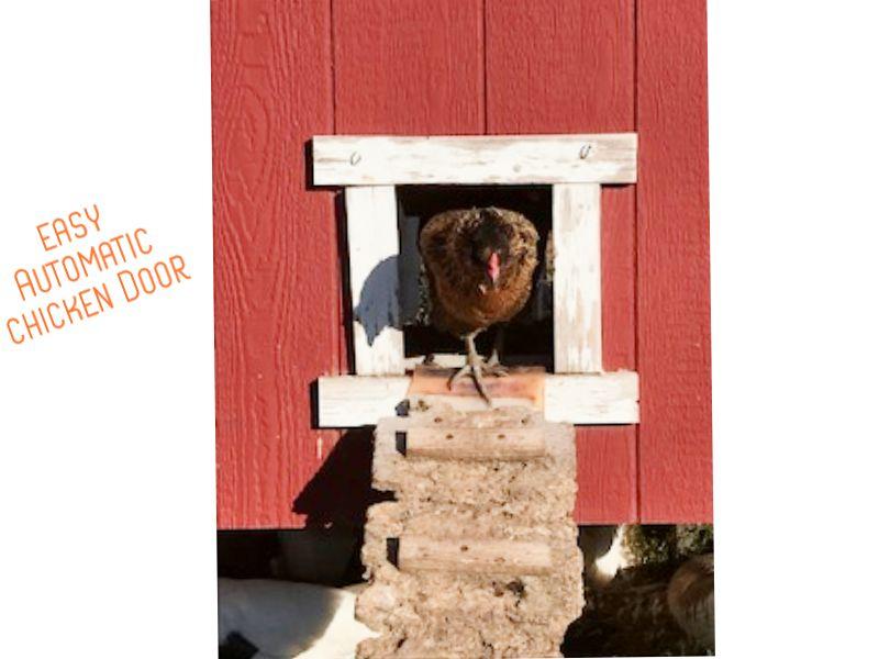 Picture of Easy Automatic Chicken Door