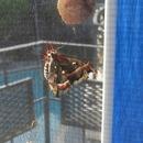 Hatching Moths!