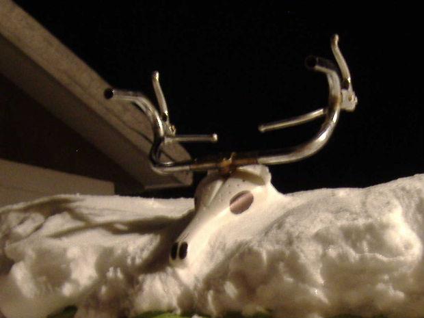 reindeer skull.JPG