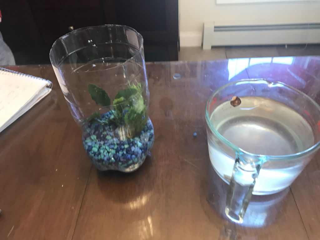 Picture of Add Your Water Plants