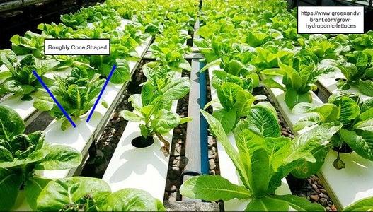 Geometry to Maximize Plant Density