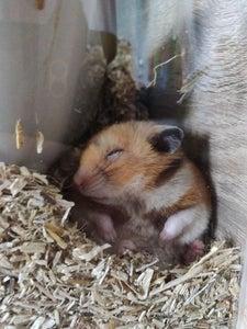 Enjoy Your Well Deserved Sleep (while Hammy Runs)