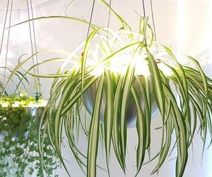 悬挂植物光