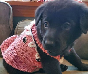 Pinafore for Puppy