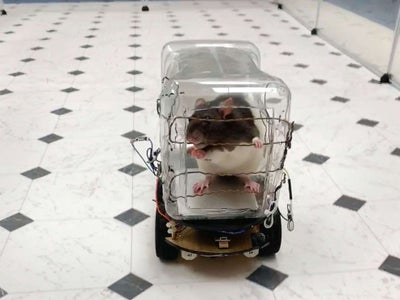 Rat-Operated Vehicle