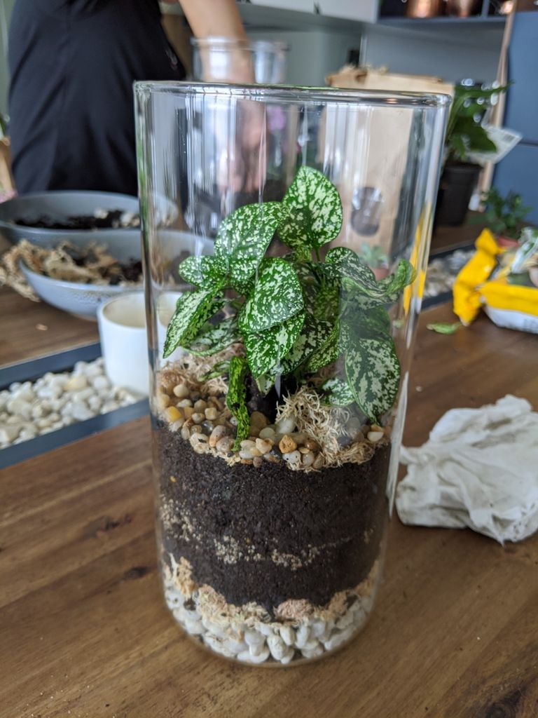 Picture of Making Your Terrarium