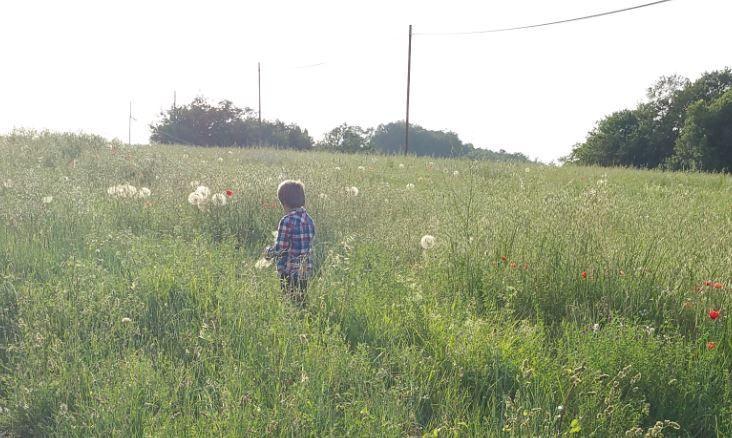 Picture of Giant Fractal Dandelion