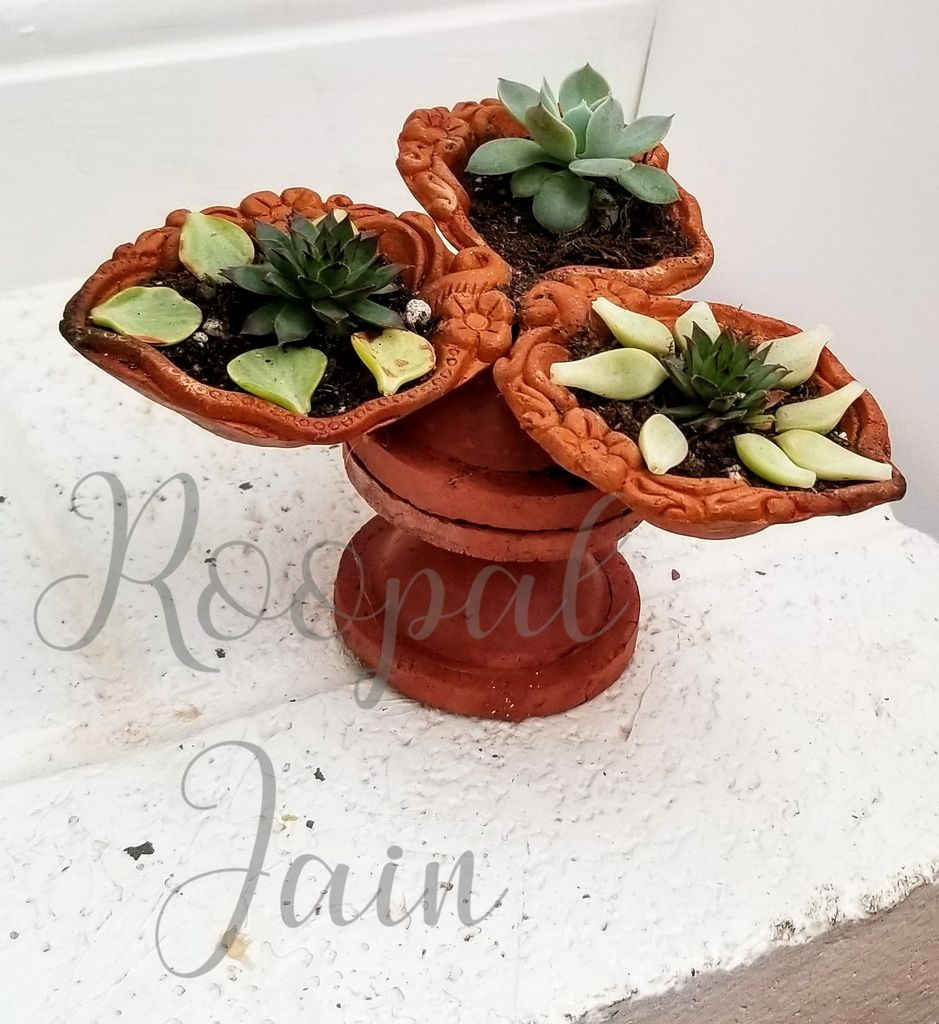 Picture of Plant Your Succulents
