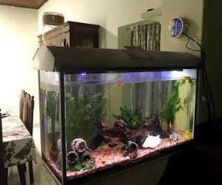 Automated Aquarium Control (IoT)