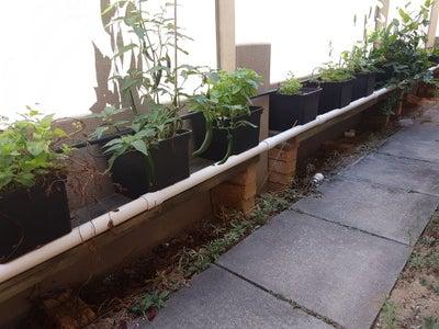 Herb Garden Between Wall Piers