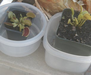 How to Bring That Store-bought VenusFlyTrap Back to Life!