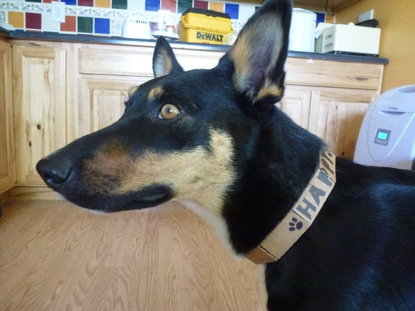Cardboard Dog Collar
