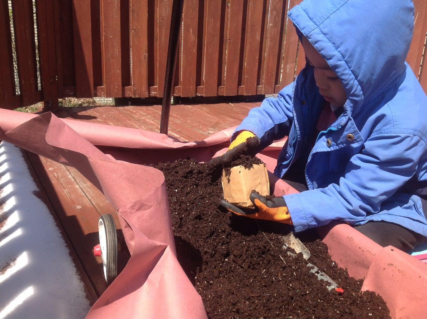 Germinate Seeds and Grow Yong Seedlings