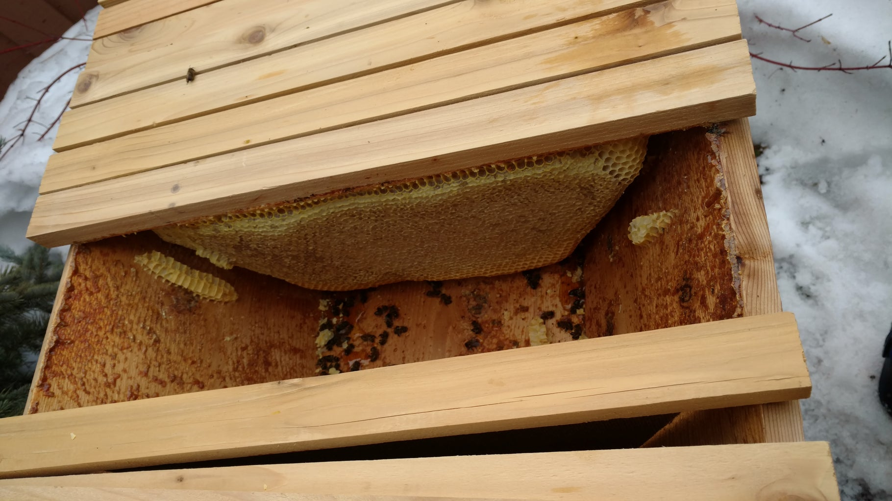 Be Good to Your Bees