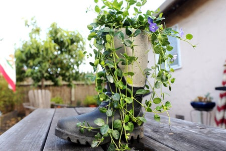 Plant!