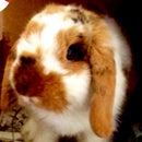 Rabbits R us