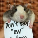Rat tricks