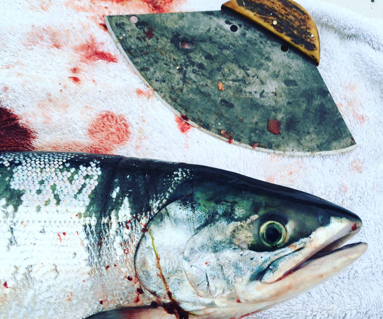 Canning Smoked Alaska Salmon