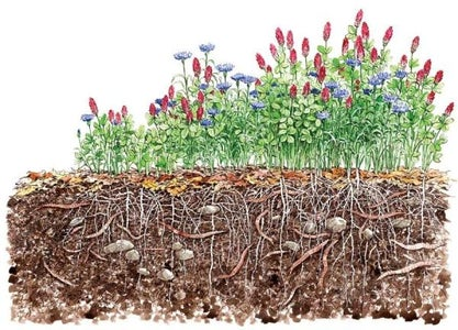 Covercrop