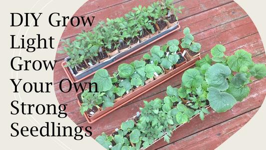 DIY Grow Light and Grow Strong Seedlings