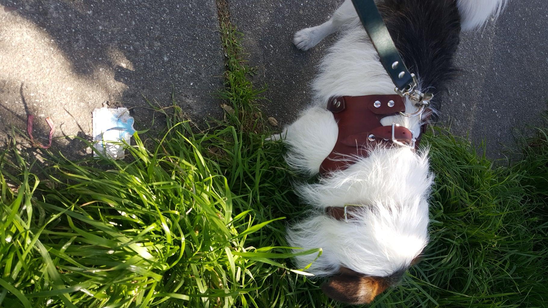 Go Walk Your Dog Now!