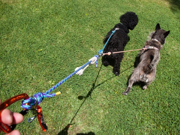 Rope Leash for 2 Dogs