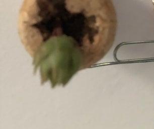 Smallest Succulent Planter Ever