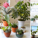 A New Owner's Guide to Houseplants