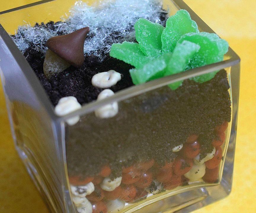 DIY Edible Terrarium
