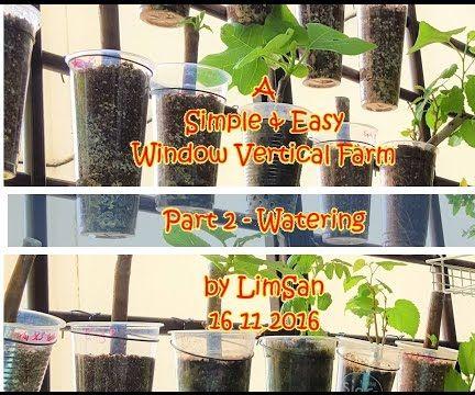 Singapore LimSan : A Simple&Easy Window Vertical Farm - Part 2 WATERING