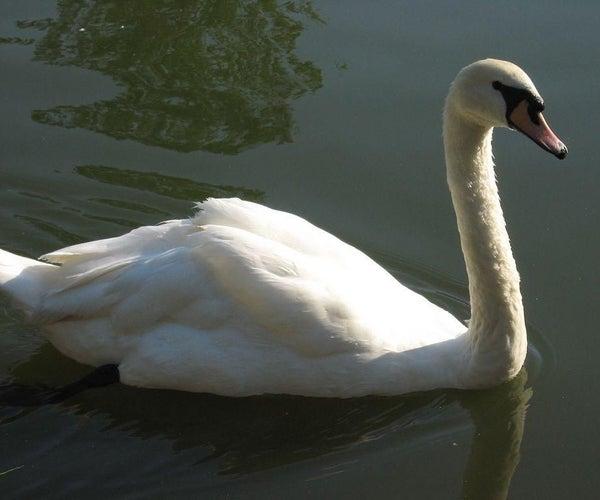 Swan-shaped Pot!