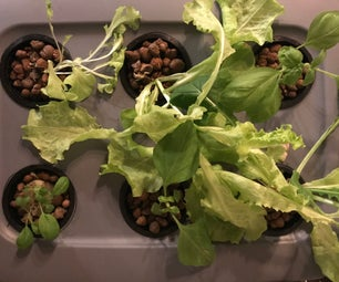 Experimental Gardener: Growing Things to Eat in a Hydroponic Garden
