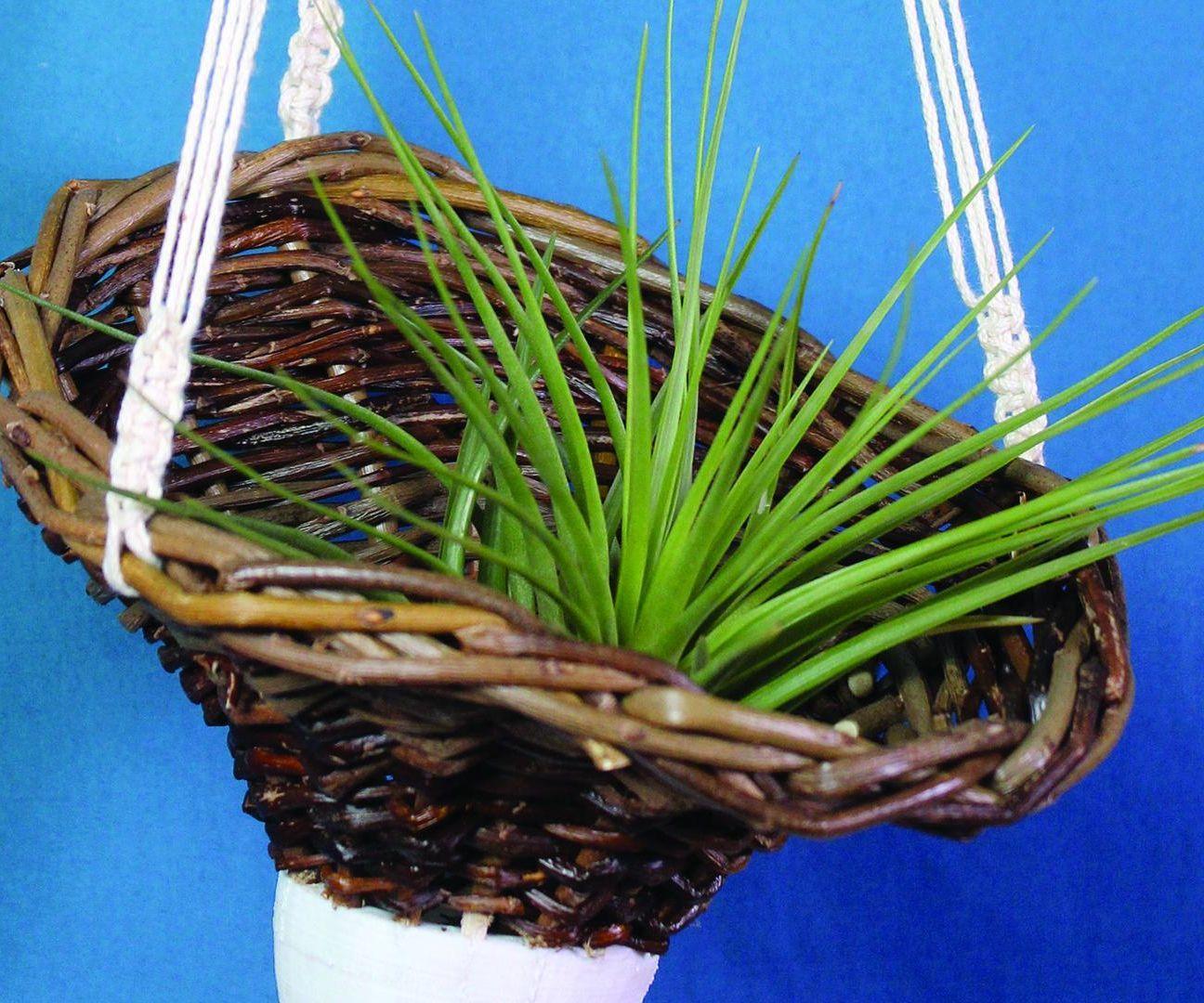 Basketry 2.0 - Air Plant