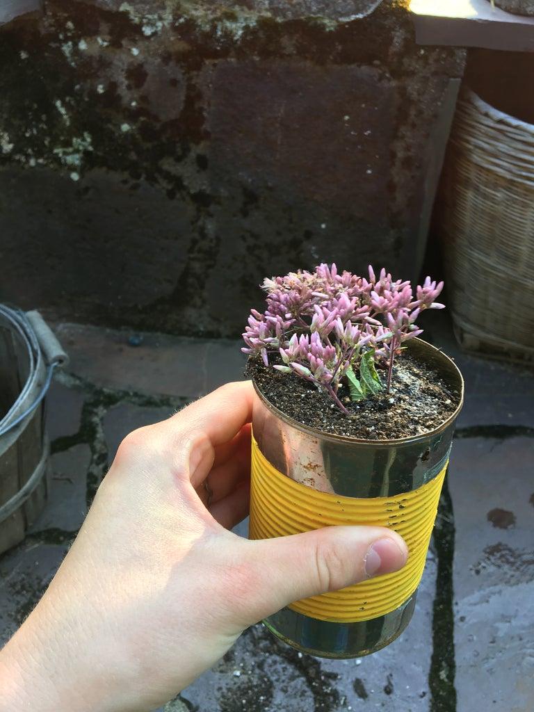 Plant Your Plants!