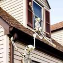 Climbing Halloween Skeletons
