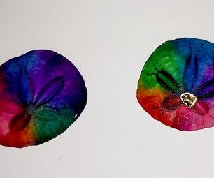 Vivid Rainbow Colored Sand Dollars