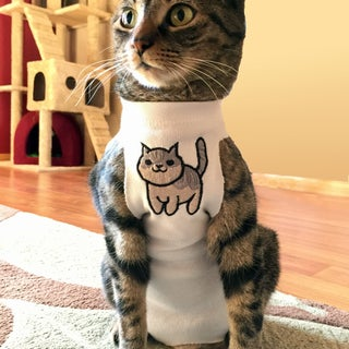 Superior Post-surgical Feline & Canine Appliance.  (Or:  Dump the Cone!)