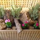 """ikea """"hol"""" turned into a flower pot"""