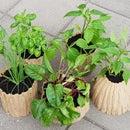 3D Scanned Tree Trunk Planter Pots