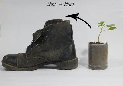 Plant + Shoe
