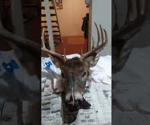 How to Make a Skull Mount