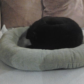How to Sew a Round Cat Bed & Bolster Pillow