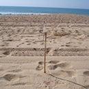 Beachcomber Weathervane