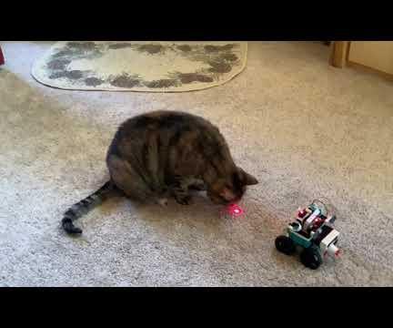 Animated Cat Toy