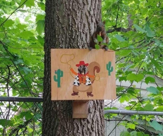 Photo and Feeding Booth for Squirrels